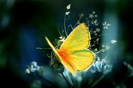 Pour représenter le premier de mes accompagnements :l'alchimie et la renaissance, un papillon jaune doré sur une fleur en pleine effervescence