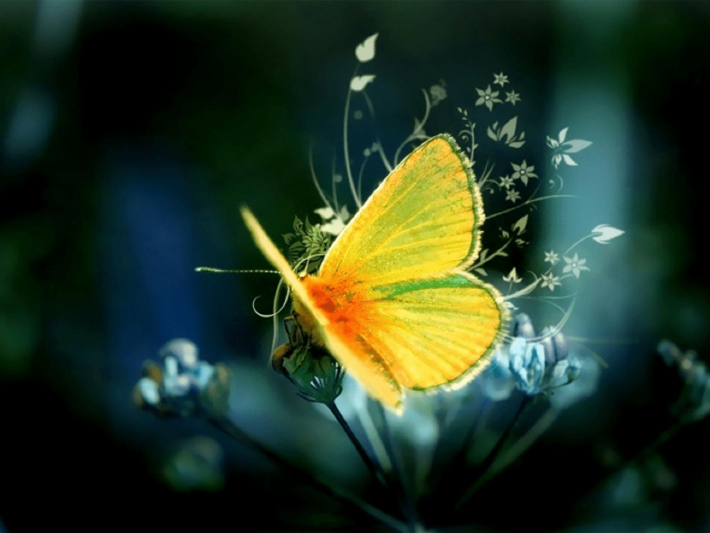 Accompagnement Alchimie et Renaissance pour créer sa vie, s'aimer avec un papillon jaune doré sous un fond magique